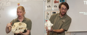 Animated Wildlife Educators