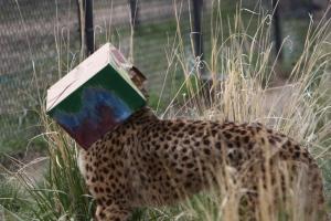 Cheetah Pinata