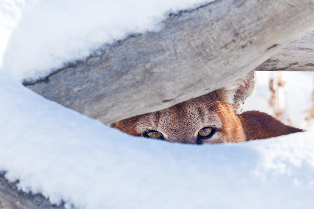 Milo Hiding