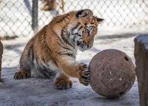 Lily with ball