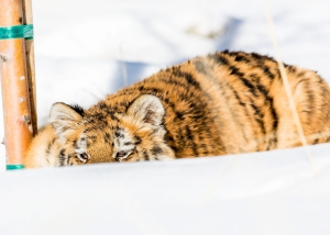 Lily hiding in snow