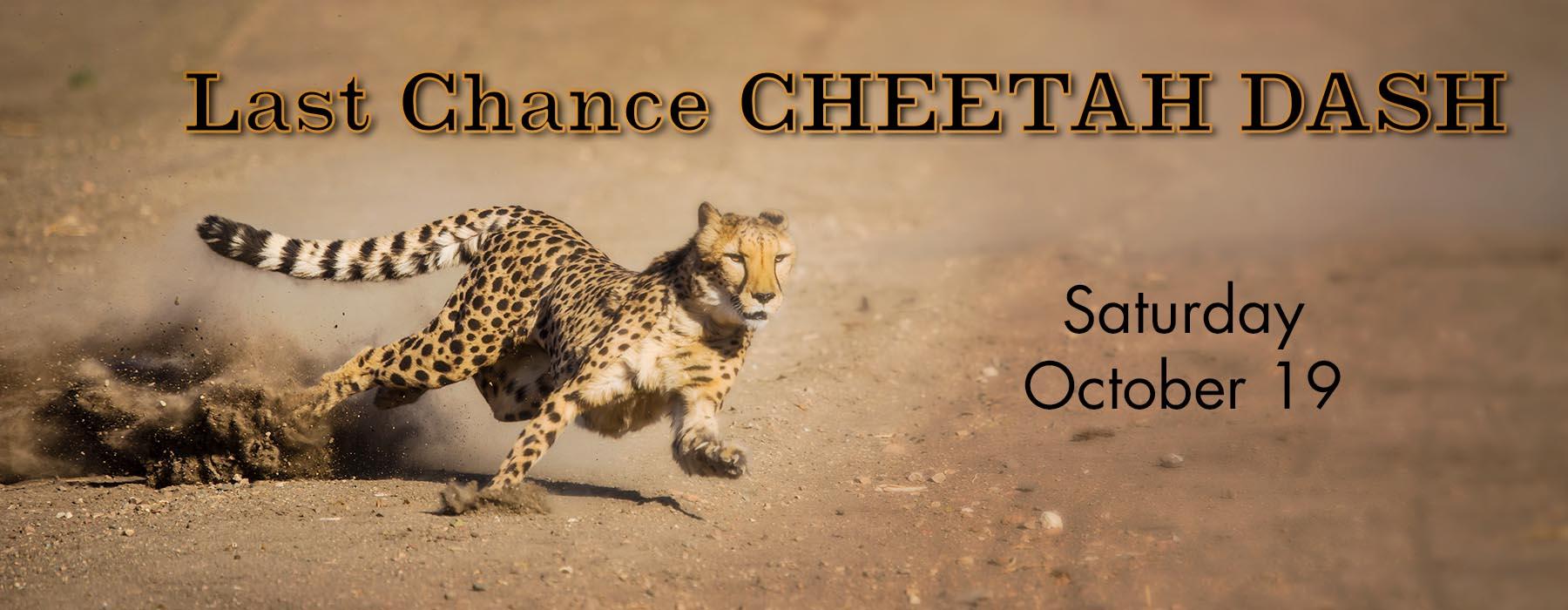 Last Chance Cheetah Dash